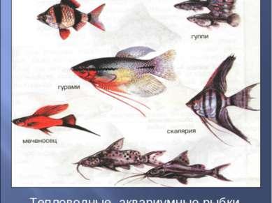 барбус сомики Тепловодные аквариумные рыбки