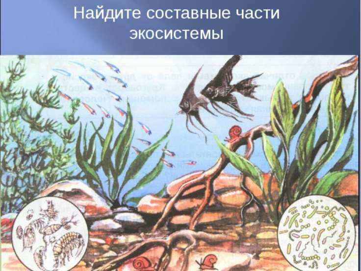 Найдите составные части экосистемы