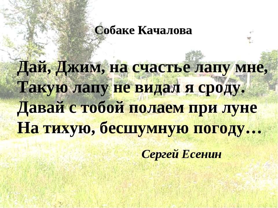 Сергей Есенин Дай, Джим, на счастье лапу мне, Такую лапу не видал я сроду. Да...