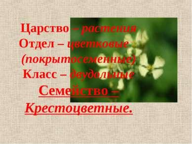 Царство – растения Отдел – цветковые (покрытосеменные) Класс – двудольные Сем...