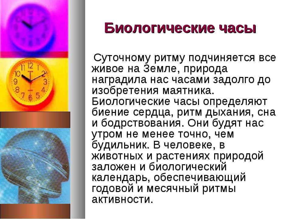 Биологические часы Суточному ритму подчиняется все живое на Земле, природа на...