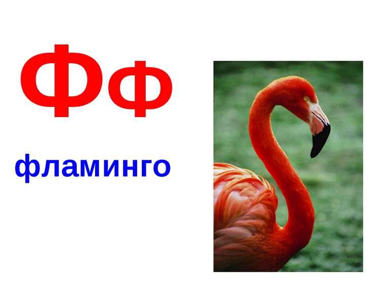 ФФ фламинго