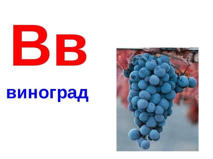 Вв виноград