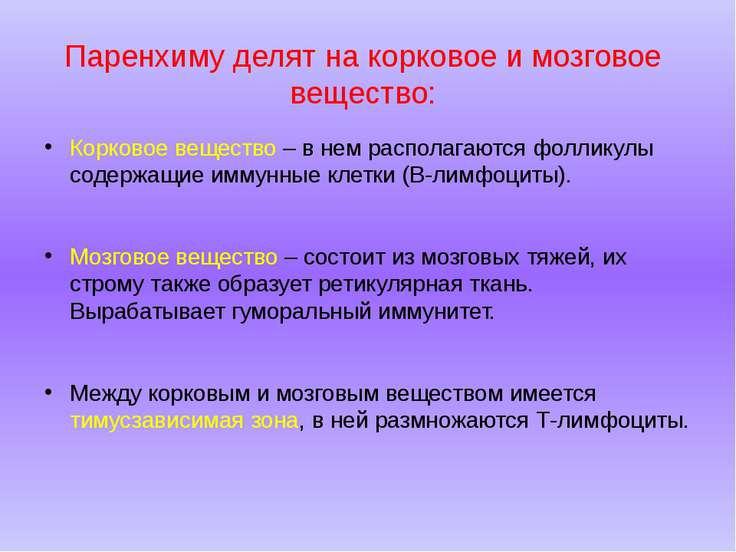 Паренхиму делят на корковое и мозговое вещество: Корковое вещество – в нем ра...