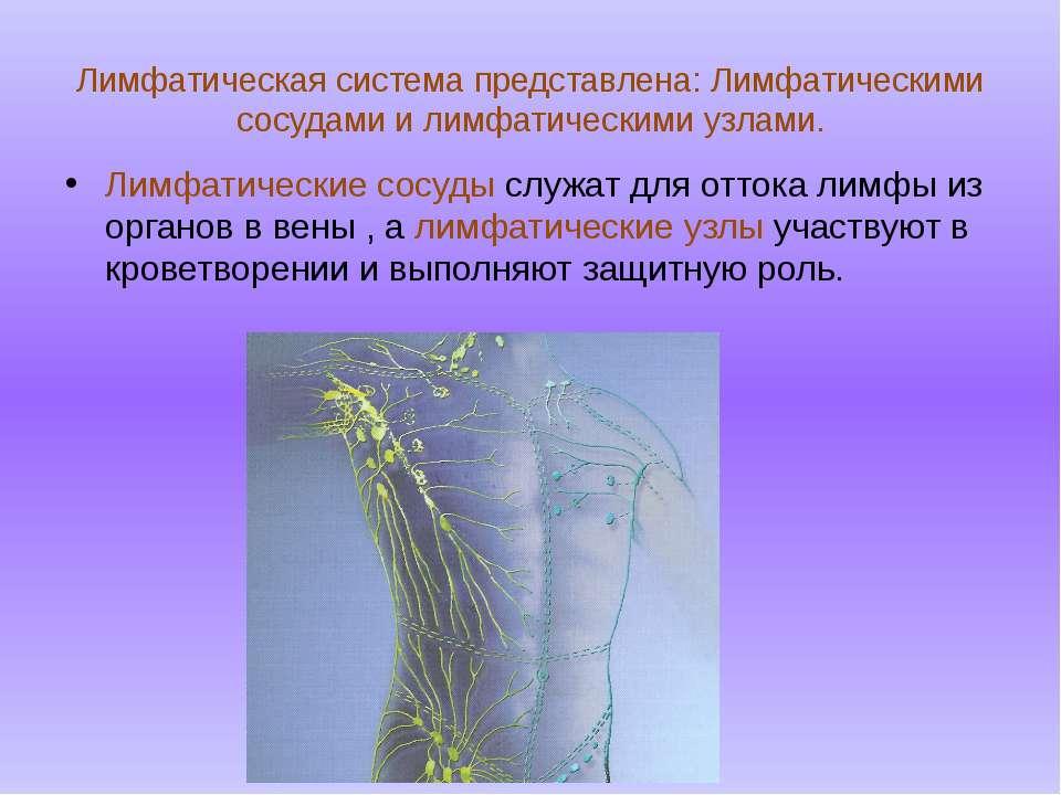 Лимфатическая система представлена: Лимфатическими сосудами и лимфатическими ...