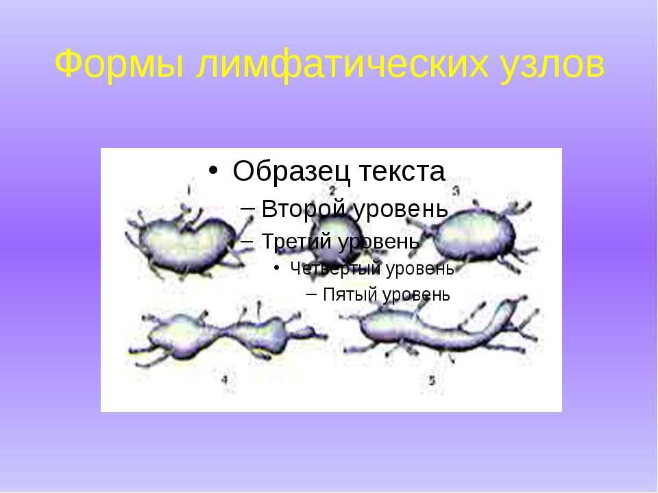 Формы лимфатических узлов