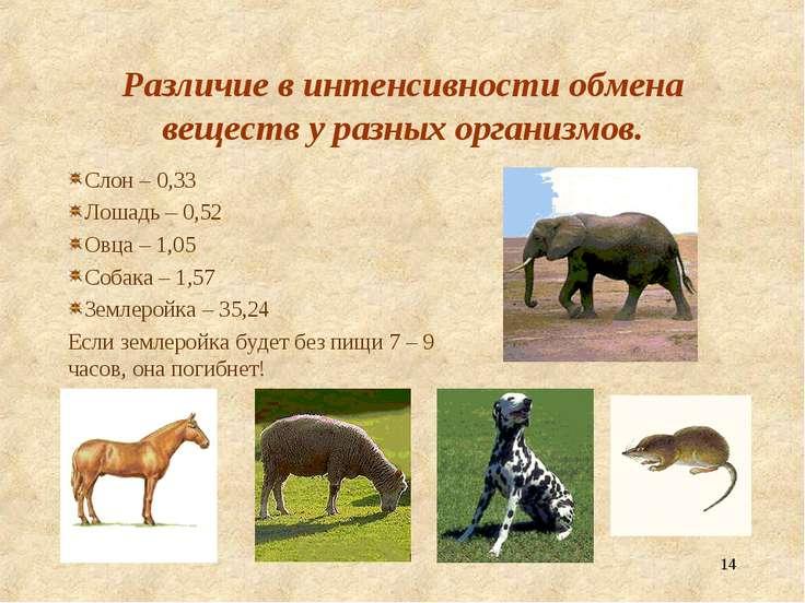 * Различие в интенсивности обмена веществ у разных организмов. Слон – 0,33 Ло...