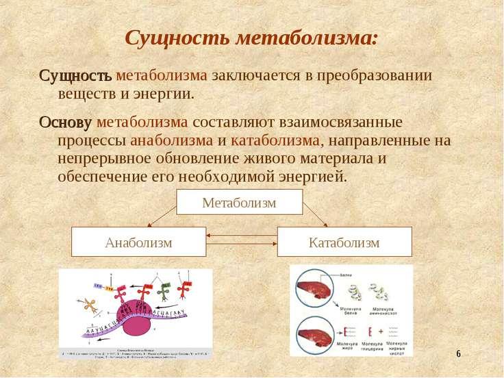 * Сущность метаболизма: Сущность метаболизма заключается в преобразовании вещ...