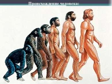 Рамапитек Австралопитек Homo habilis  Происхождение человека: Homo erectus H...