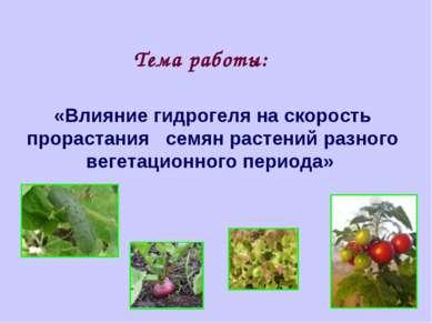 «Влияние гидрогеля на скорость прорастания семян растений разного вегетационн...