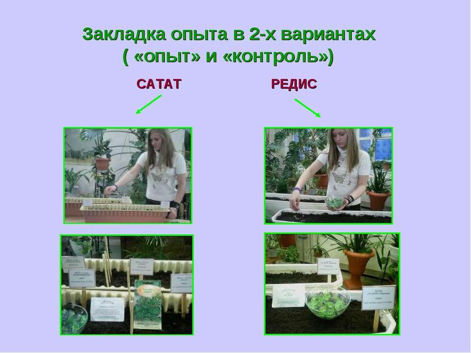 Закладка опыта в 2-х вариантах ( «опыт» и «контроль») САТАТ РЕДИС