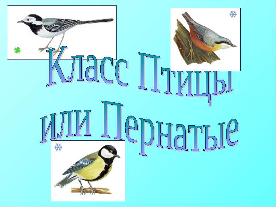 Картинки по запросу класс Птиц