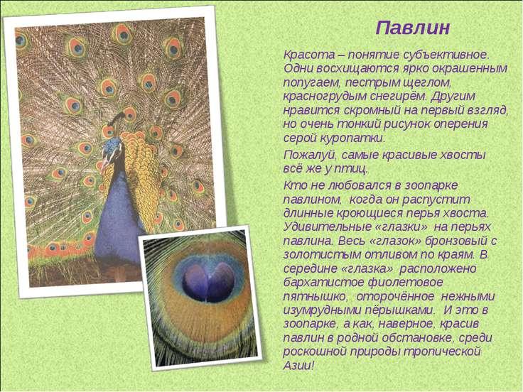 Павлин Красота – понятие субъективное. Одни восхищаются ярко окрашенным попуг...