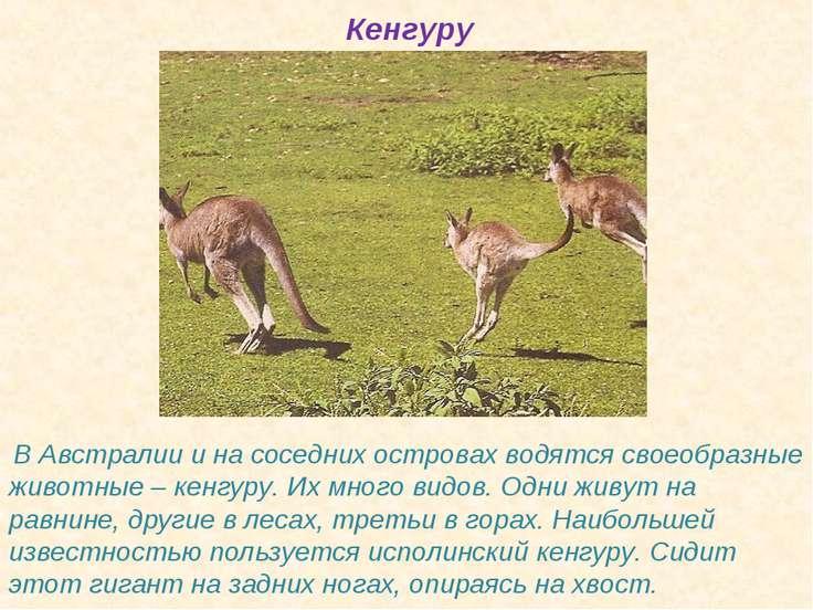 Кенгуру В Австралии и на соседних островах водятся своеобразные животные – ке...