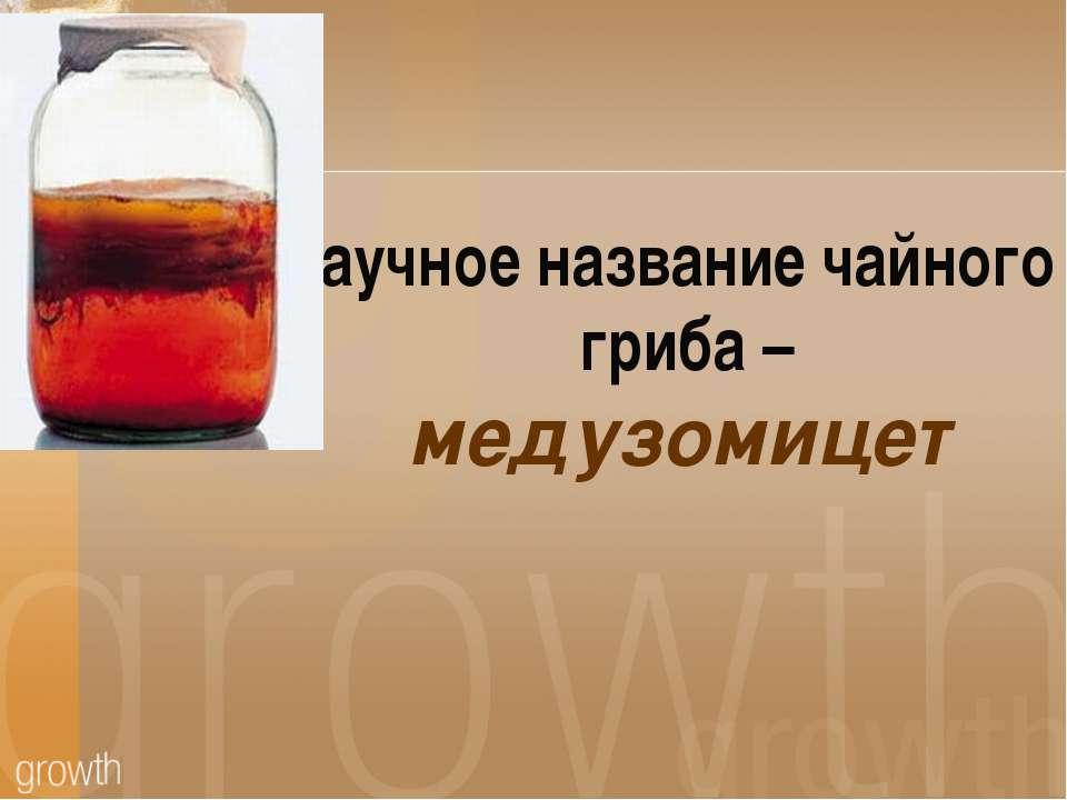 Научное название чайного гриба – медузомицет