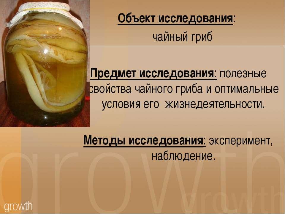 Объект исследования: чайный гриб Предмет исследования: полезные свойства чайн...