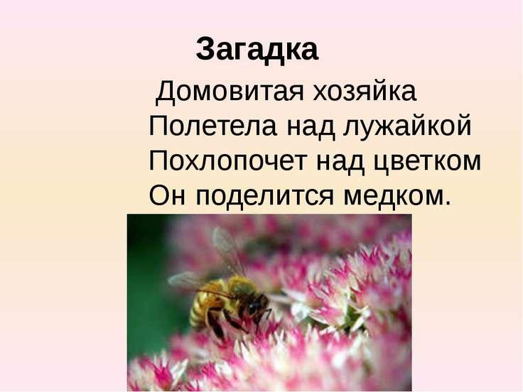 Загадка Домовитая хозяйка Полетела над лужайкой Похлопочет над цветком Он под...
