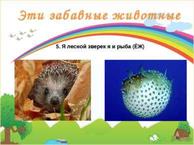 Эти забавные животные 5. Я лесной зверек я и рыба (ЁЖ)