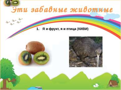 Эти забавные животные Я и фрукт, я и птица (КИВИ)