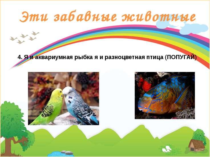 Эти забавные животные 4. Я и аквариумная рыбка я и разноцветная птица (ПОПУГАЙ)