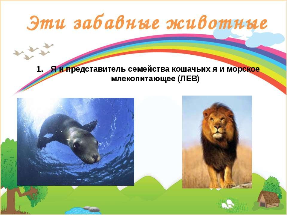 Эти забавные животные Я и представитель семейства кошачьих я и морское млекоп...