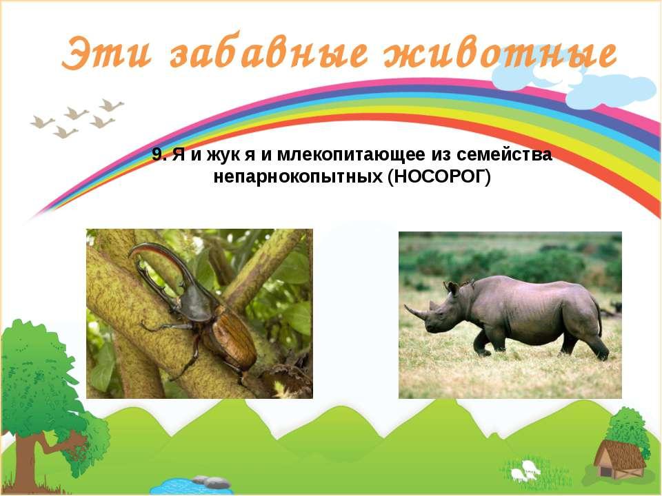 Эти забавные животные 9. Я и жук я и млекопитающее из семейства непарнокопытн...