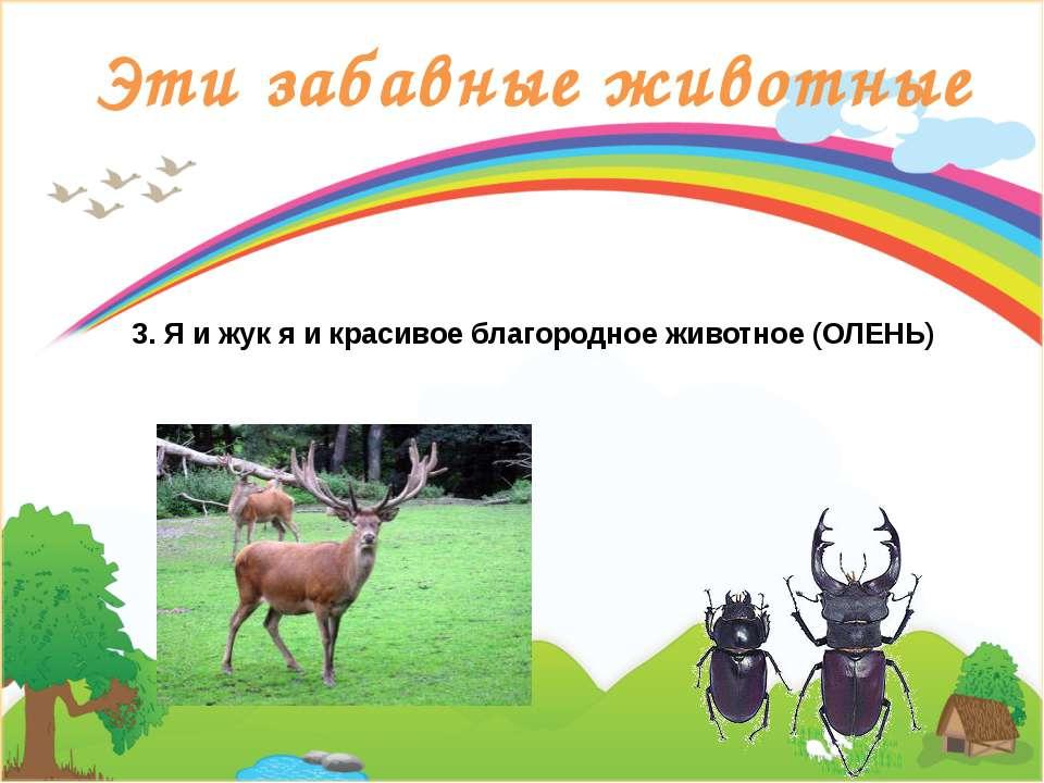 Эти забавные животные 3. Я и жук я и красивое благородное животное (ОЛЕНЬ)