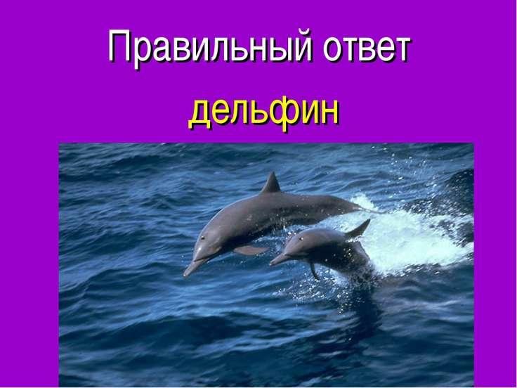 Правильный ответ дельфин