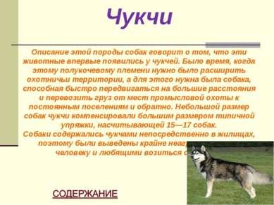 Чукчи Описание этой породы собак говорит о том, что эти животные впервые появ...