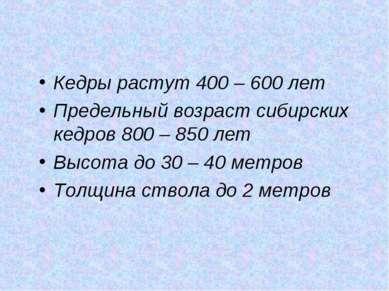 Кедры растут 400 – 600 лет Предельный возраст сибирских кедров 800 – 850 лет ...