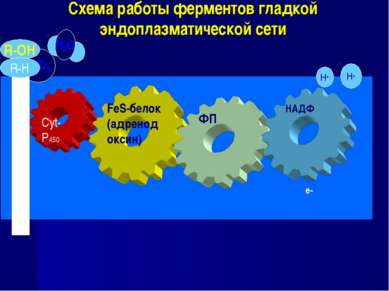 Схема работы ферментов гладкой эндоплазматической сети FeS-белок (адренодокси...