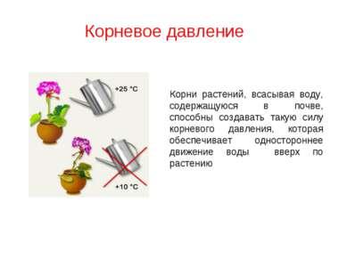 Корни растений, всасывая воду, содержащуюся в почве, способны создавать такую...