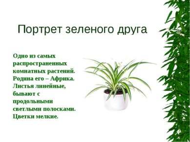 Портрет зеленого друга Одно из самых распространенных комнатных растений. Род...