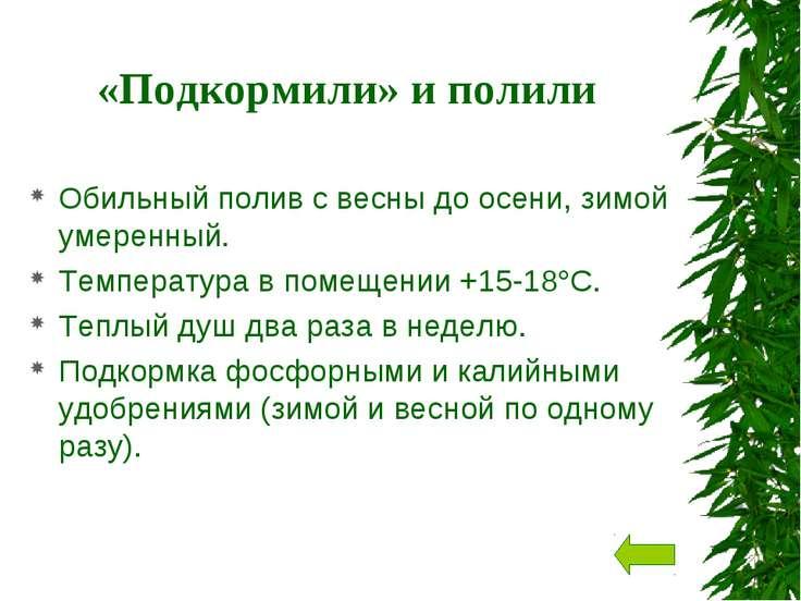 «Подкормили» и полили Обильный полив c весны до осени, зимой умеренный. Темпе...