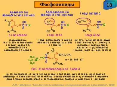"""18 Фосфолипиды А.М. Чибиряев """"Биологически активные соединения живых организм..."""