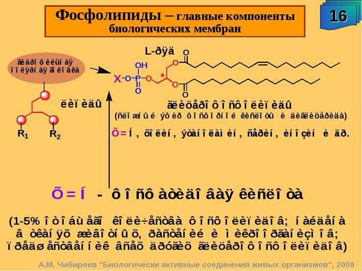 """16 Фосфолипиды – главные компоненты биологических мембран А.М. Чибиряев """"Биол..."""
