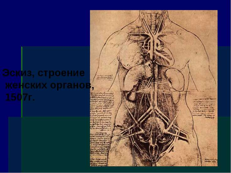 Эскиз, строение женских органов, 1507г.