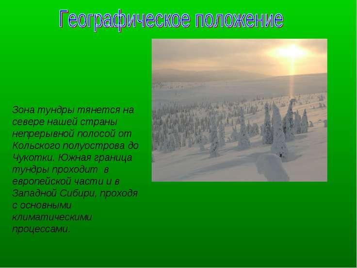 Зона тундры тянется на севере нашей страны непрерывной полосой от Кольского п...