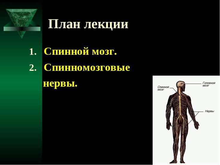 План лекции Спинной мозг. Спинномозговые нервы.