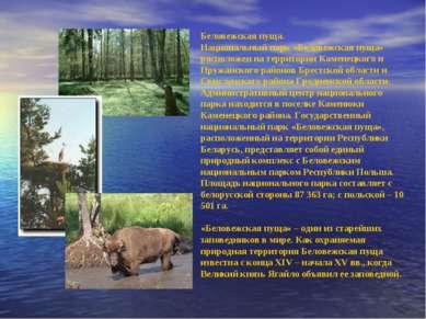Беловежская пуща. Национальный парк «Беловежская пуща» расположен на территор...
