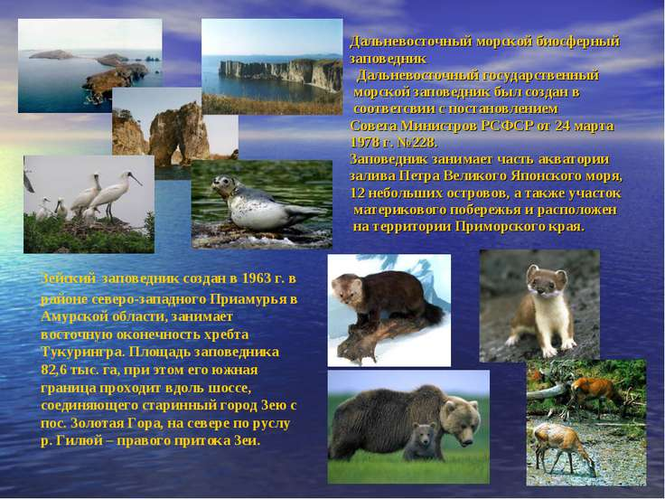Дальневосточный морской биосферный заповедник Дальневосточный государственный...
