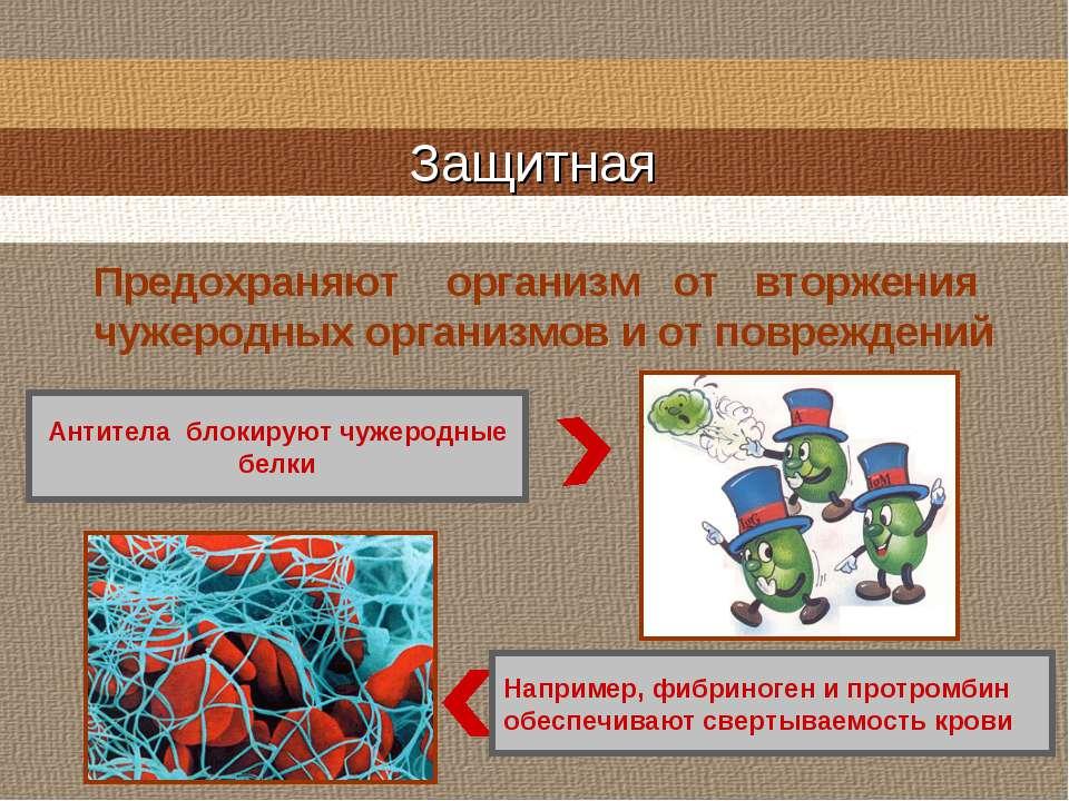 Защитная Например, фибриноген и протромбин обеспечивают свертываемость крови ...