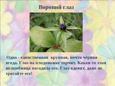 Вороний глаз Одна - единственная крупная, почти чёрная ягода. Глаз на плодоно...