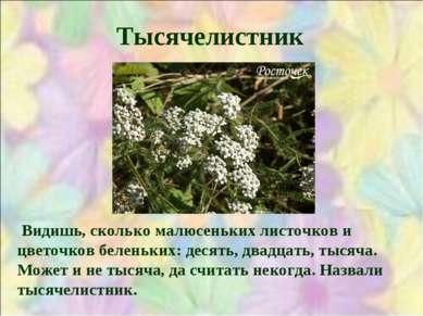 Тысячелистник Видишь, сколько малюсеньких листочков и цветочков беленьких: де...