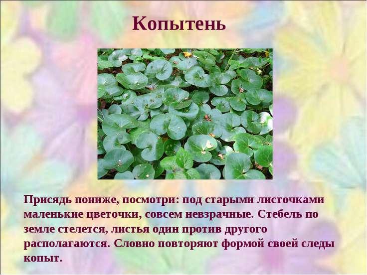Копытень Присядь пониже, посмотри: под старыми листочками маленькие цветочки,...