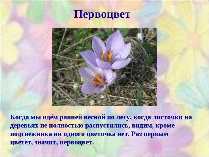 Первоцвет Когда мы идём ранней весной по лесу, когда листочки на деревьях не ...