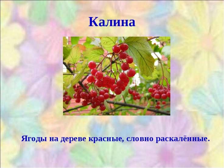 Калина Ягоды на дереве красные, словно раскалённые.