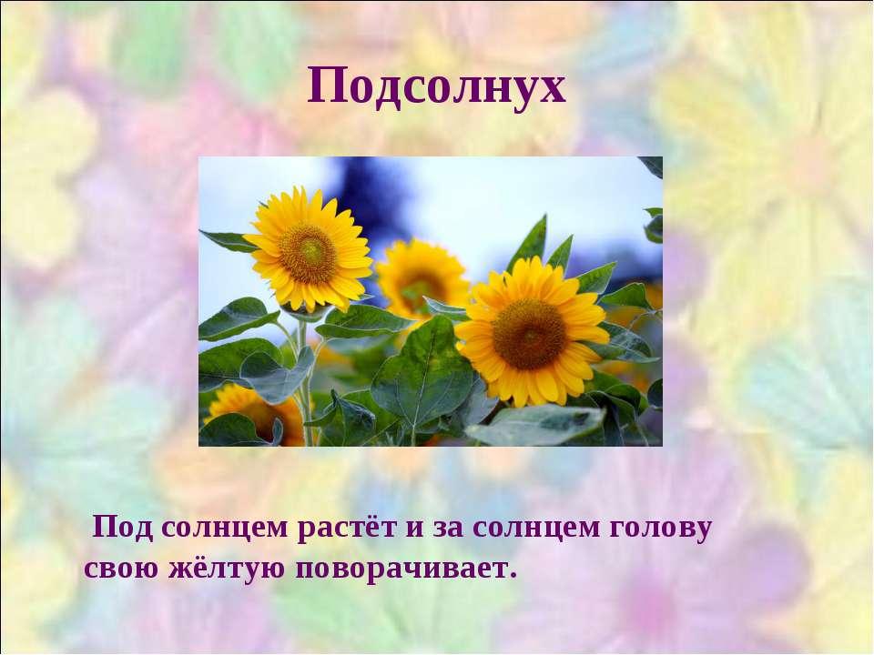 Подсолнух Под солнцем растёт и за солнцем голову свою жёлтую поворачивает.