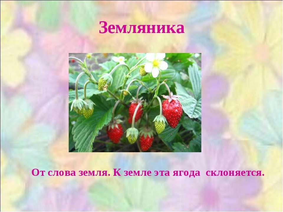 Земляника От слова земля. К земле эта ягода склоняется.