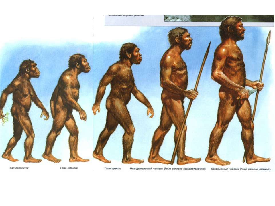 a history of the development of man and the theory of evolution